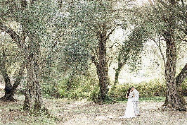 Couple Marriage Love Trees Forest  - lubovlisitsa / Pixabay