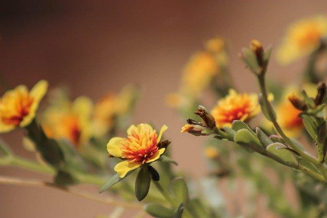 Flower Orange Flowers Love Summer  - Ogutier / Pixabay