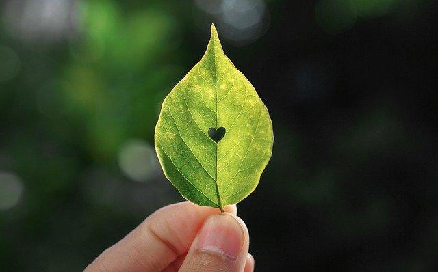 Heart Leaf Nature Fingers Love  - VuLy / Pixabay
