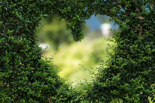 Heart Leaves Foliage Garden Bush  - biancamentil / Pixabay