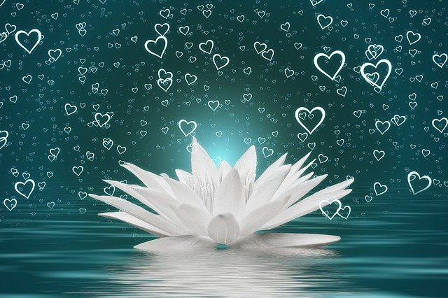 Heart Water Lily Water Wave Love  - geralt / Pixabay