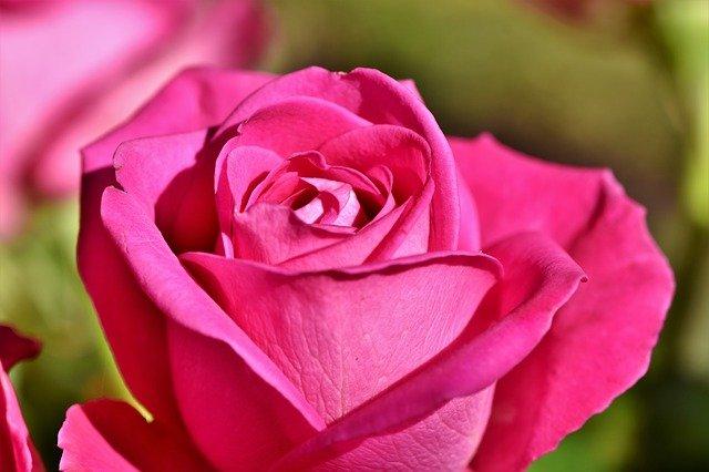 Rose Bouquet Of Roses Blossom Bloom  - Capri23auto / Pixabay