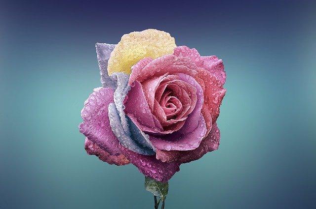 Rose Flower Love Romance Beautiful  - Bessi / Pixabay