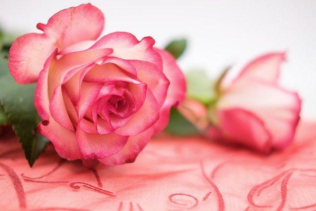 Rose Flower Petals Bloom Blossom  - Bru-nO / Pixabay
