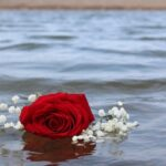 Rose Red Beach Water Romantic  - Jschultz2 / Pixabay