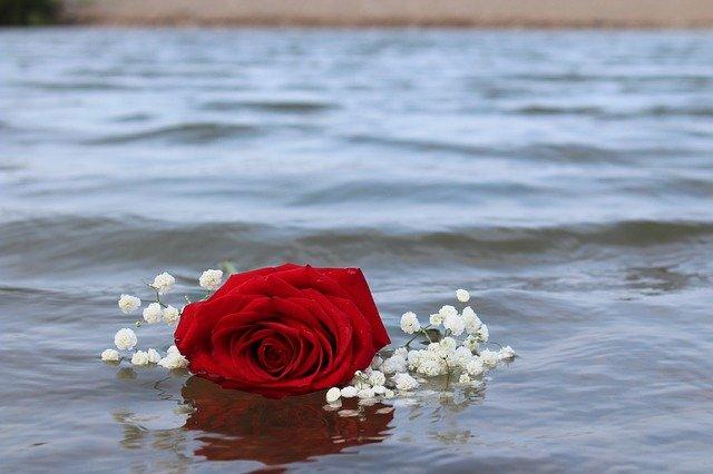 Rose Red Beach Water Romantic  - Jschultz2 / Pixabay