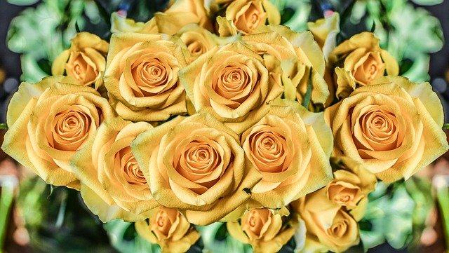 Roses Flowers Petal Love Romance  - monicore / Pixabay