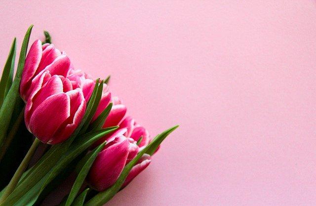 Tulip Pink Flowers Bouquet Bloom  - romanakr / Pixabay