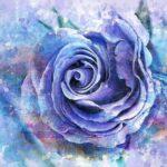 Watercolor Rose Flower Romantic  - TT / Pixabay