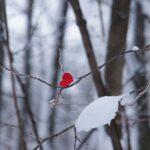 Winter Tree Snow Nature Trees  - Deny_Hell / Pixabay
